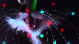 Download Lagu Gatti Dj - Disco Cats Mp3