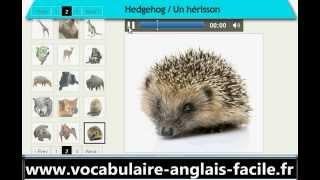 Vocabulaire Anglais Les Animaux Sauvage (vocabulaire Anglais Facile)
