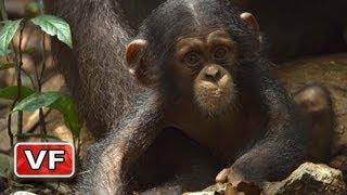 Chimpanzés - Bande Annonce