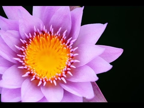 Reiki Healing Music: 1 Hour Zen Music, Chakra Cleanse, Meditation Music, Sleep Music, Calming ☯199
