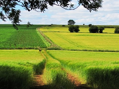 Cotswolds   Old Sodbury to Horton and Hawkesbury Upton round | gloucestershire  Walks