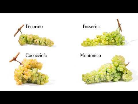Abruzzo del vino: storia, caratteristiche del territorio e Doc