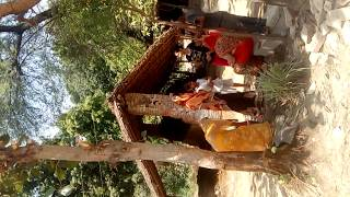 Baishakh pooja banyan tree,You can see steps of Baishakh pooja. Mostly this prayer happen in Uttar pradesh in May end week or as per calendar date.