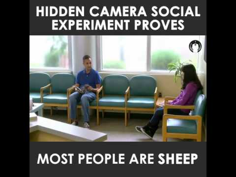 Social experiment - most people are sheep