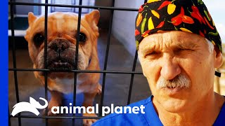 Dr. Jeff Helps Dogs Rescued From Puppy Mills | Dr. Jeff: Rocky Mountain Vet by Animal Planet