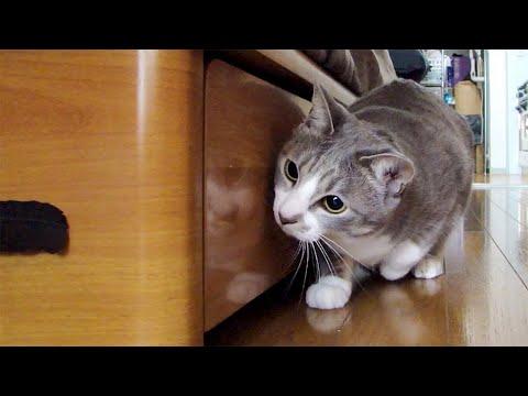 貓咪最愛和主人玩遊戲!好可愛!