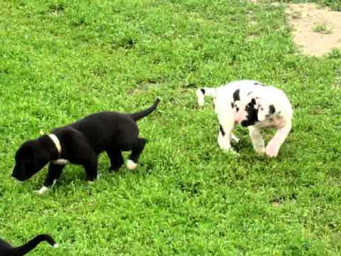 May 6 puppies, video 059