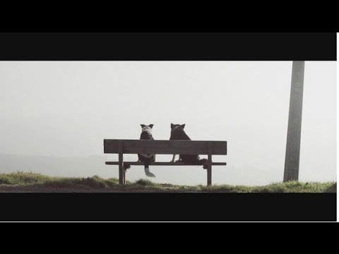 Luca Schreiner - Missing