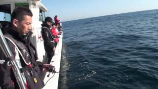 釣具のポイント様釣り研修。解説→真鯛80センチオーバーゲット!