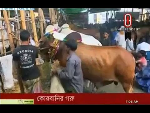 Qurbani Demand for stopping import of cattle from India & Myanmar (17-08-2018)