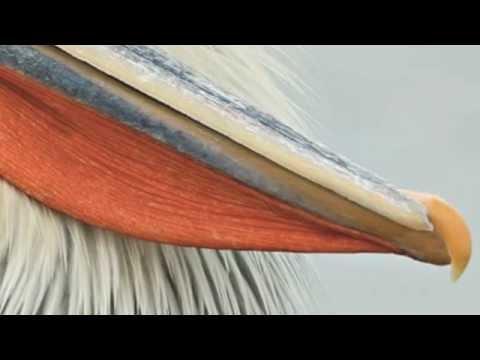 Video ALWOODS - Kerkini Lake download in MP3, 3GP, MP4, WEBM, AVI, FLV January 2017