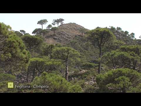 Der Große Wanderweg Málagas. Etappe 6: Frigiliana - Cómpeta (Deutsch)