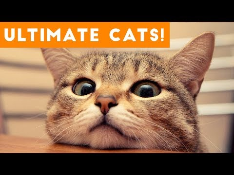 Ultimate FUNNY CAT and KITTEN Compilation of 2017 | Funny Pet Videos (видео)
