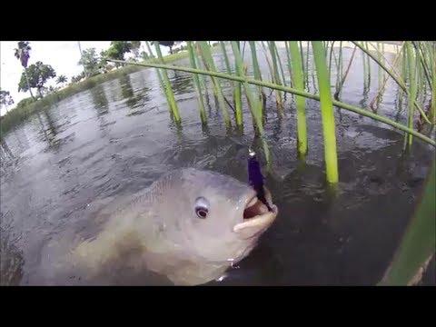Flyfishing Florida