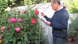 How Geoff & Heather Grow Dahlias