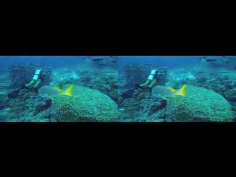 Scuba Diving the Galapagos Islands in 3D - For Google Cardboard - 3D side by side (3DS)_Diving destinations. Best of all time