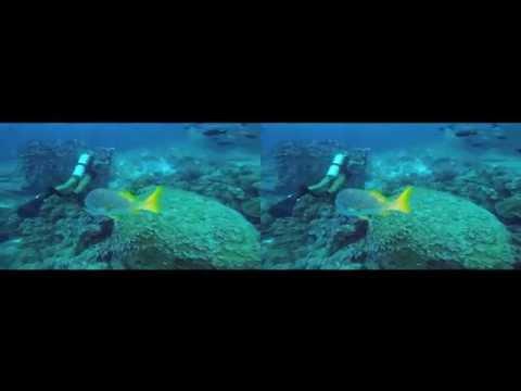 Scuba Diving the Galapagos Islands in 3D - For Google Cardboard - 3D side by side (3DS)_Merülő helyek. Legeslegjobbak