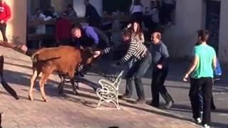 Jabaga Spain  city photos : Cogidas y revolcón vaquillas jabaga 2016