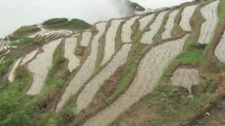 The LongSheng 龙胜 rice terraces after a thunderstorm