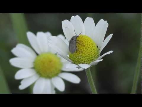 Красоты природы и Жуки наркоманы - Оф натарал беаати анд Беетлес аддикц