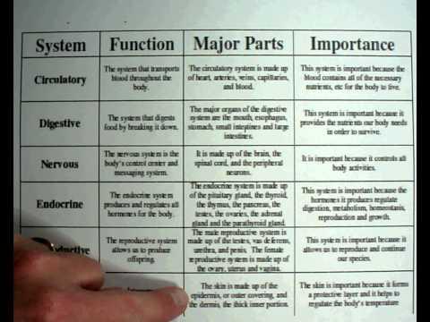 Biology #8 – Human Body Systems.wmv