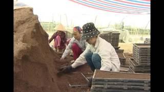 Công nghệ sản xuất mạ khay từ giá thể từ mùn rơm rạ