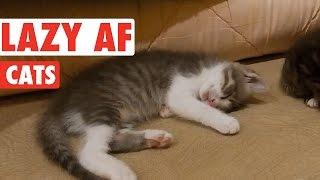 animale faze pisici lenese