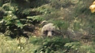 Video Jakt För Livet Björn & Lo IV MP3, 3GP, MP4, WEBM, AVI, FLV Mei 2017