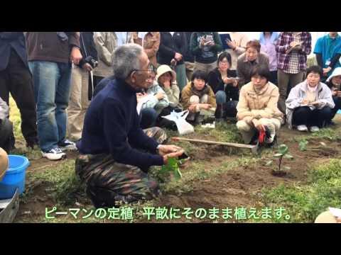 自然栽培講座  木村秋則先生  ピーマンの定植実演