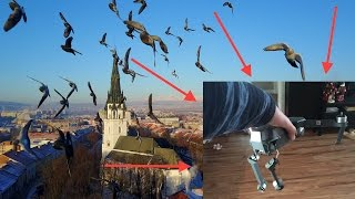 Video Birds ATTACKED my drone! The best Dji Mavic crash ever! MP3, 3GP, MP4, WEBM, AVI, FLV Oktober 2017