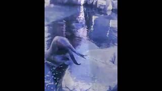 Sea lion diving