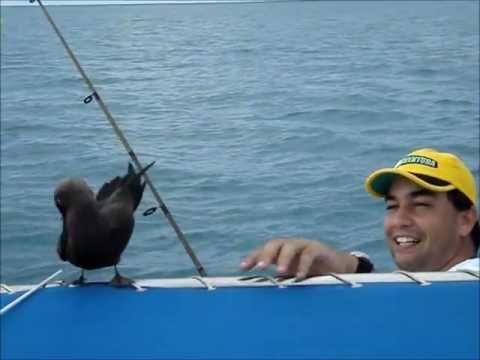 Pesca de sarda em Nova Viçosa/BA.