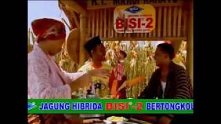Jagung Hibrida BISI-2 Super, Bertongkol Dua