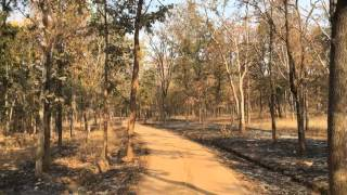 Pench India  City new picture : Safari Ride at Pench National Park - Nagpur, India