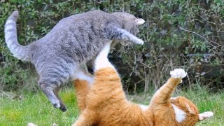 Download Video КОШАЧЬИ ЗАБАВЫ / CAT FUN MP3 3GP MP4