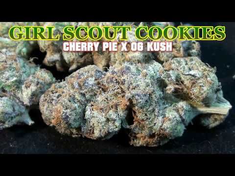 girl scout cookies - twitter.com/theccc420 facebook.com/theccc420 **PLEASE LIKE/FAVORITE THIS VIDEO IF YOU DON'T MIND HELPING US OUT!