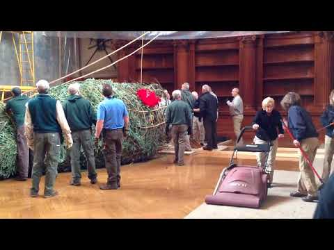 Video: How to install a 35-foot Christmas tree in a dining room