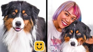 Paw-sitively Creative DIY Crafts & DIY Pet Hacks! Simple Life Hacks & More by Blossom