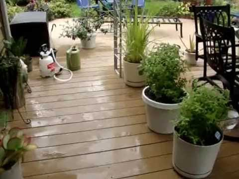WISCONSIN GARDENING in CONTAINERS – Bringing indoors for the LONG Winter