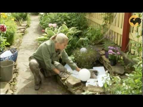 Уход за садом на ютубе