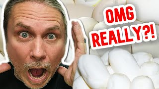 YOU WON'T BELIEVE THESE SNAKE EGGS!!  | BRIAN BARCZYK by Brian Barczyk