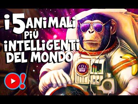 i 5 animali più intelligenti del mondo!