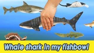 Video [EN] #53 Let's raise Whale shark in my fishbowl! kids education, Animals animationㅣCoCosToy MP3, 3GP, MP4, WEBM, AVI, FLV Juli 2018