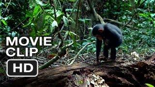 Nonton Chimpanzee Movie CLIP - Hammer (2012) Disney Nature Movie HD Film Subtitle Indonesia Streaming Movie Download