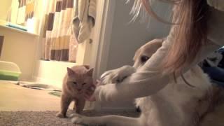 Кот и пёс – дружба навсегда!