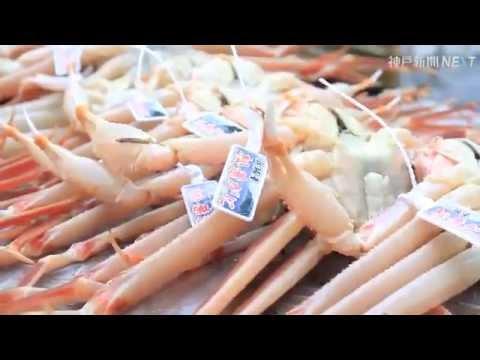 山陰沖でマツバガニの漁が解禁