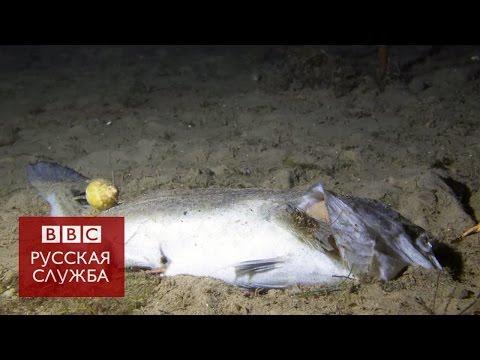 Что происходит с мертвой рыбой на дне океана