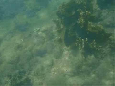 Praia do Francês - mergulho 3