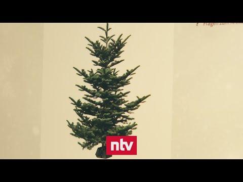Online-Weihnachtsbäume überzeugen nicht immer | n-tv