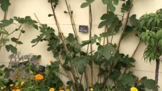 #716 Chelsea Flower Show 2012 - Der formale Obst- und Gemüsegarten